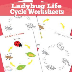Ladybug Life Cycle Worksheet