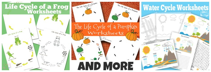 Life Cycle Worksheets - and Other Cycles