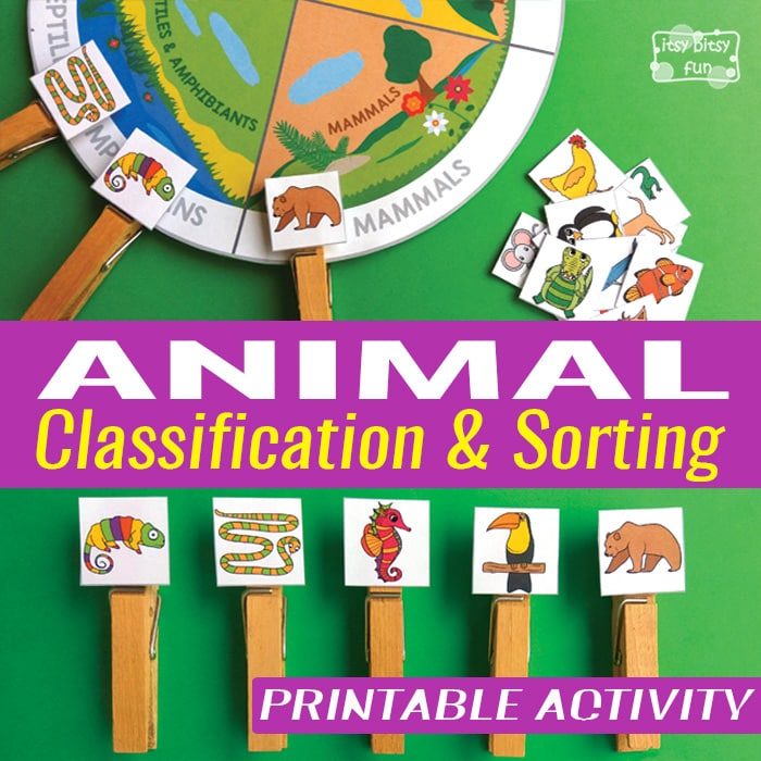 Animal Classification and Sorting Free Printable Activity
