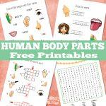 Human Body Parts Free Printable