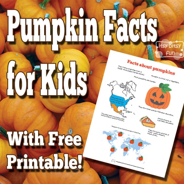 Pumpkin Facts for Kids Itsy Bitsy