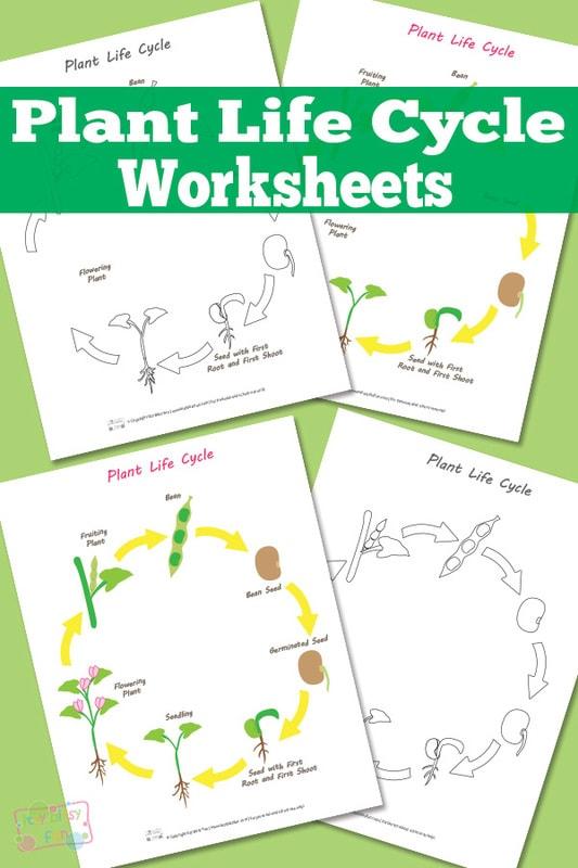 Plant Life Cycle Worksheet - itsybitsyfun.com