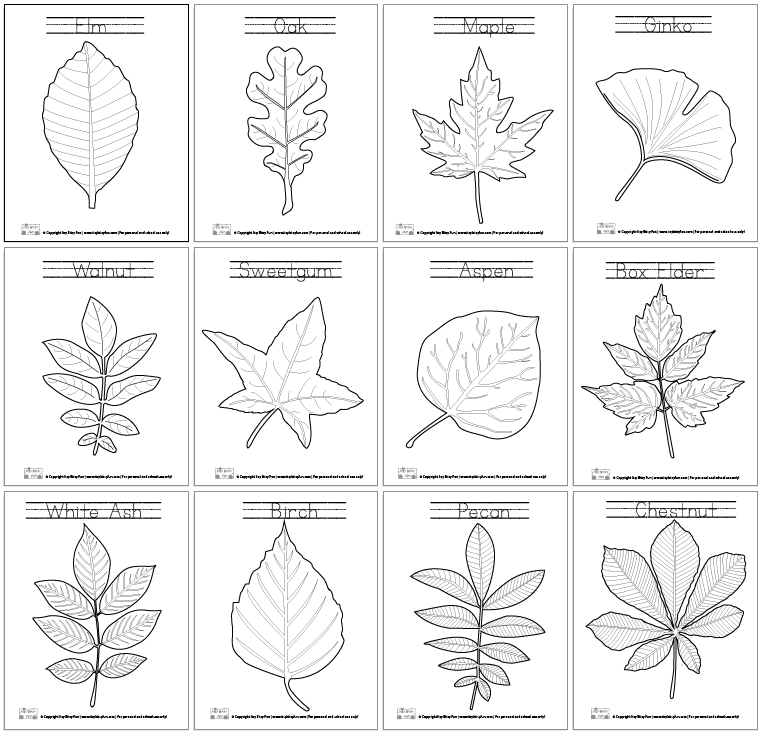Leaf Coloring Pages - Itsybitsyfun.com