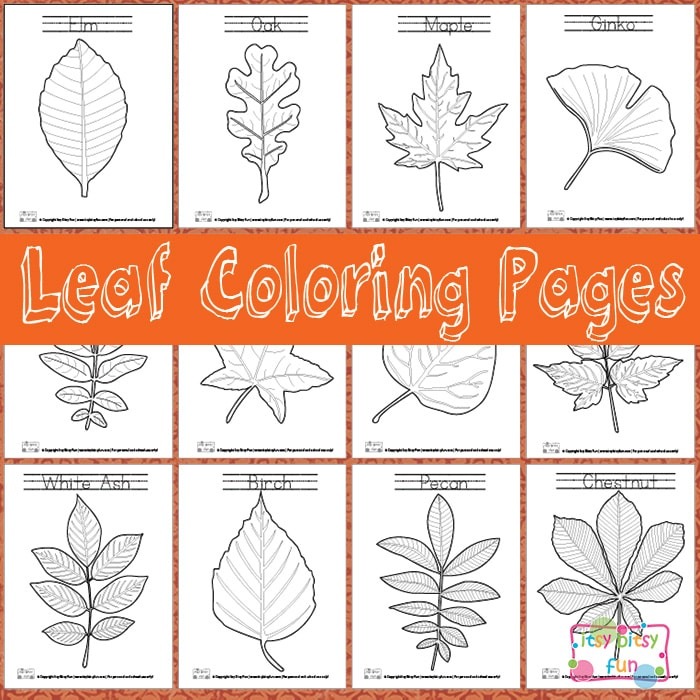 coloring pages of trees with leaves - leaf coloring pages itsy bitsy fun