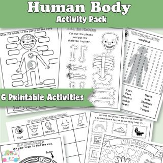 Anatomy Worksheets for Kids