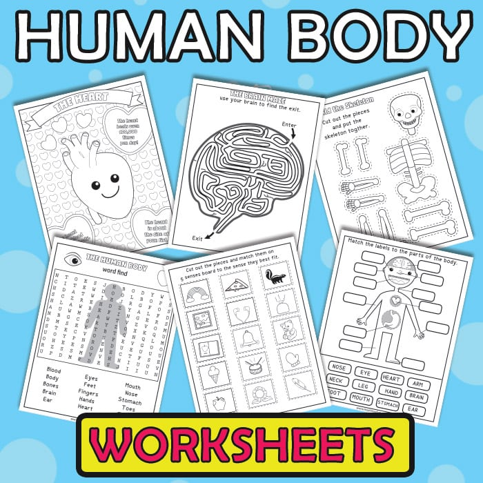 Human Body Worksheets - Printable Activity