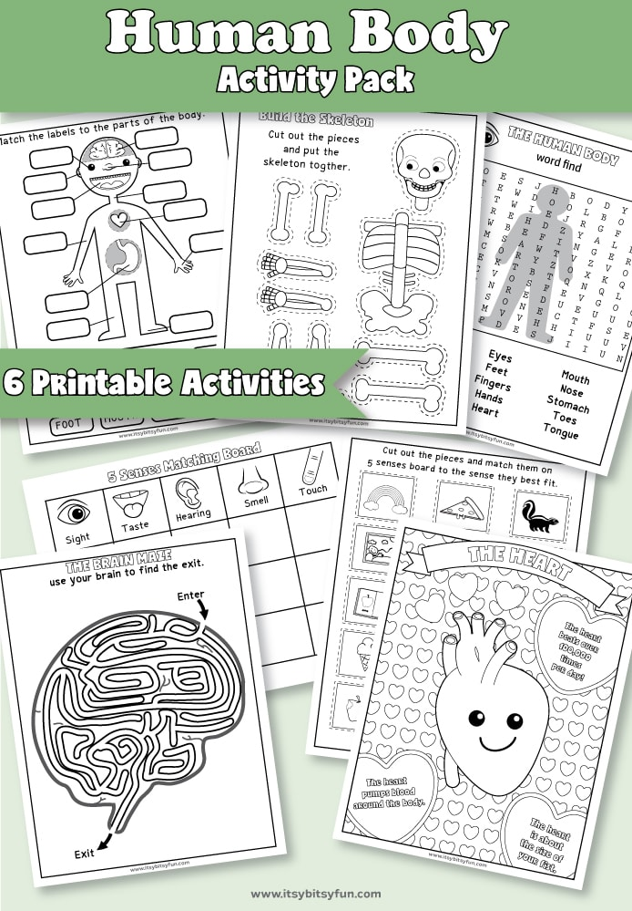 Human Body Worksheets - Itsybitsyfun.com
