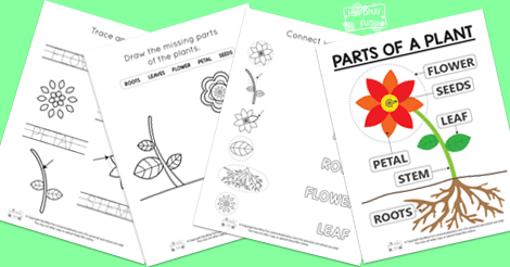 Free Printable Parts of a Plant Worksheets Itsy Bitsy Fun