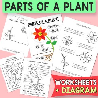 Parts of a Plant Worksheets and Diagrams