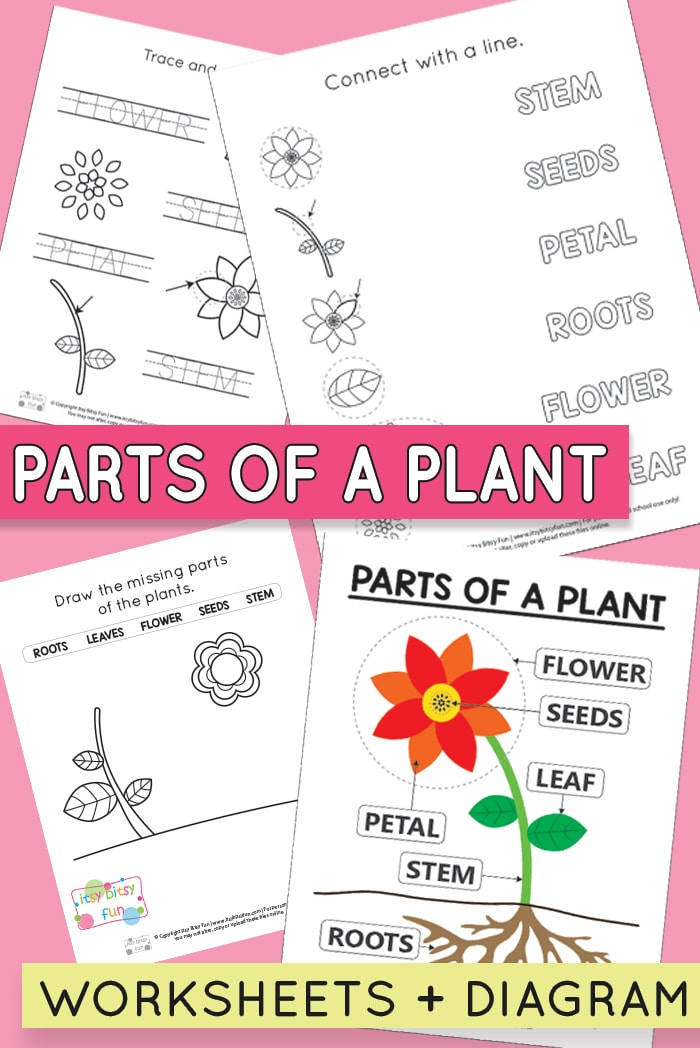 Parts of a Plant Worksheets for Preschool and Kindergarten