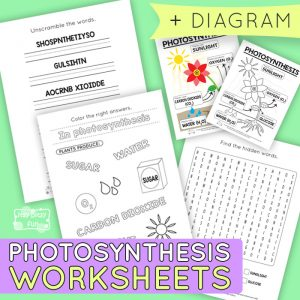 Photosynthesis Worksheets for Kids