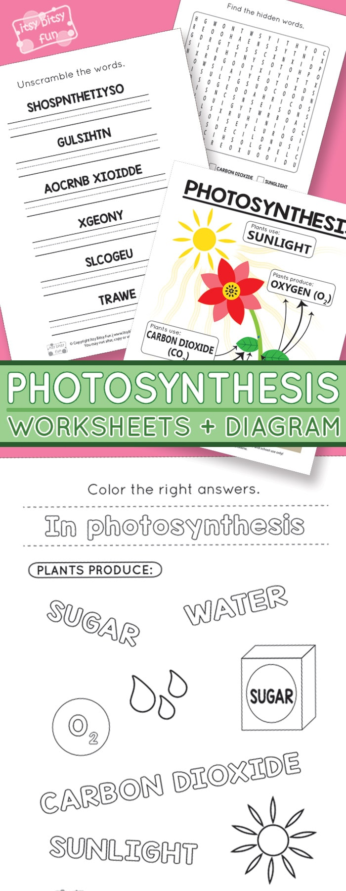 Photosynthesis Worksheets for Kids - Itsy Bitsy Fun