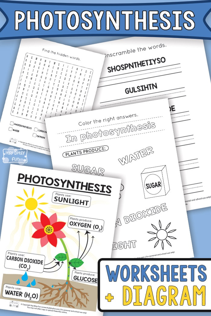 photosynthesis worksheets for kids itsy bitsy fun. Black Bedroom Furniture Sets. Home Design Ideas