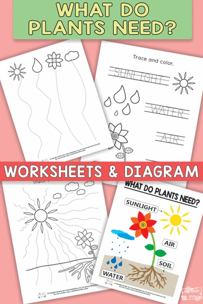 What do Plants Need Worksheets
