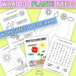 What do Plants Need Worksheets for Pre-K and K