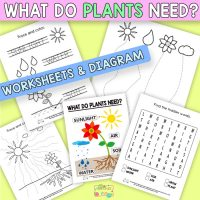 What do Plants Need to Grow Worksheets