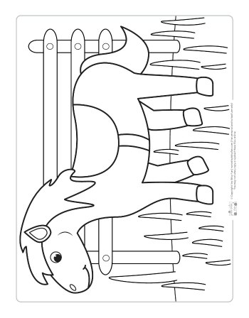 A horse coloring page for kids.