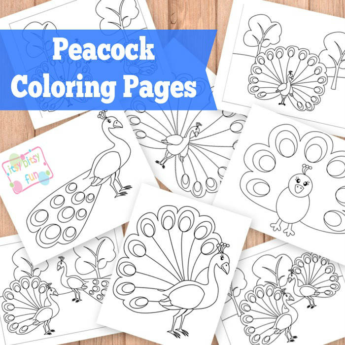Peacock coloring pages for kids.