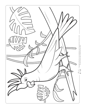 Cockatoo  Coloring Page for Kids