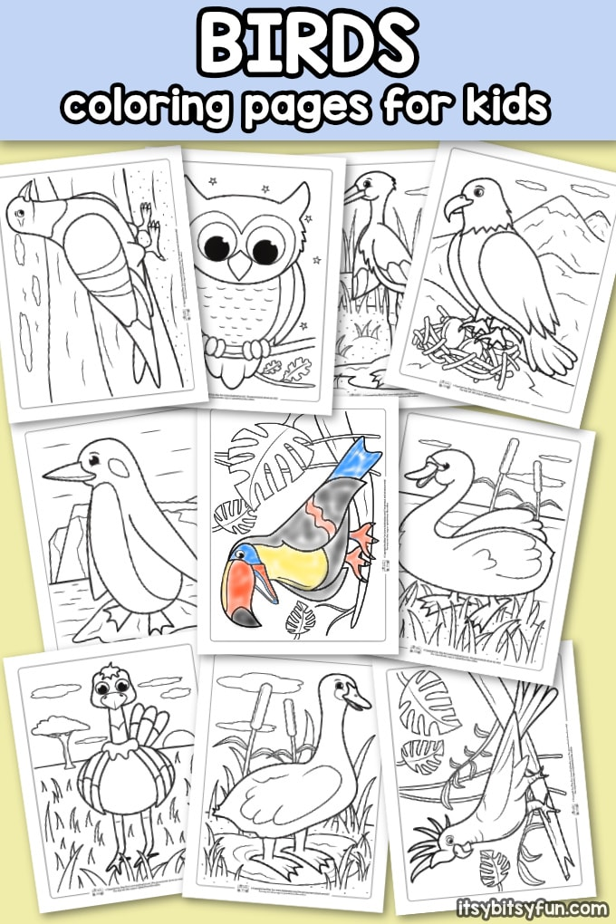 Birds Coloring Pages For Kids Itsybitsyfun Com