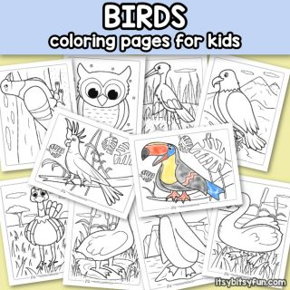 Printable Birds Coloring Pages for Kids